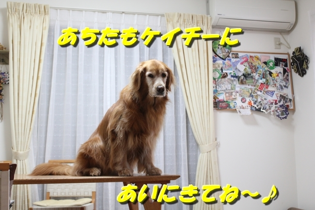 未踏峰新聞テーブル 043
