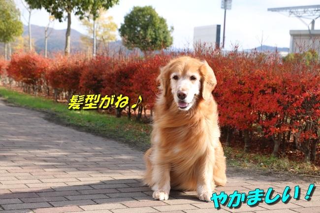 あんモナカ亡妻公園 041