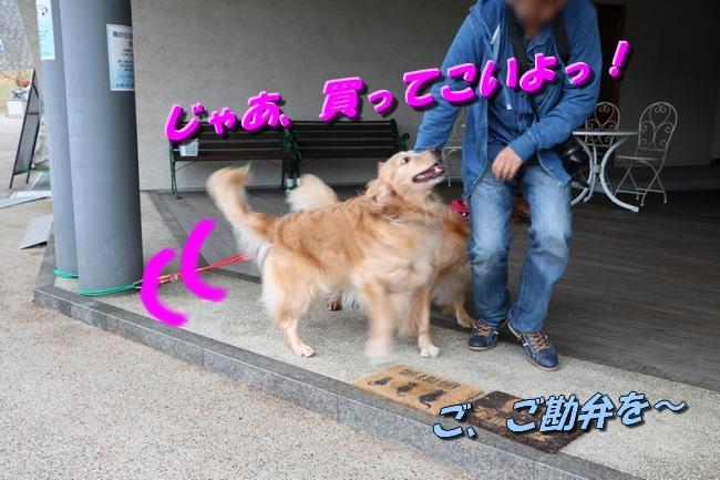はっちちゃんルカちゃん来訪 181