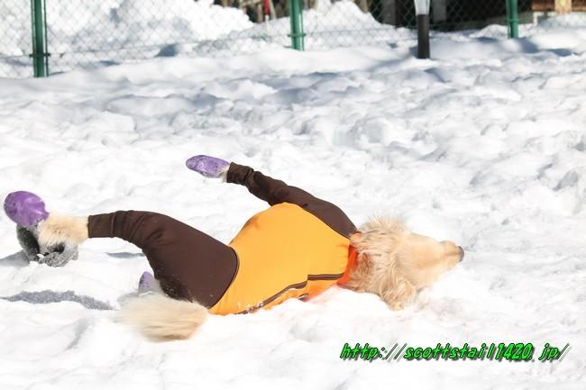 雪遊び2016 1033