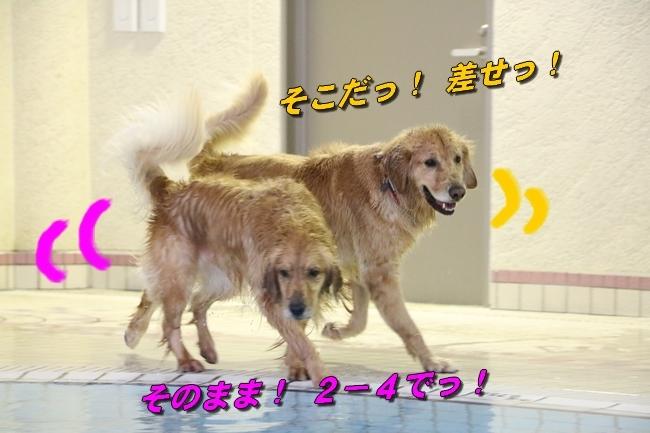 はっちちゃんルカちゃん来訪 479
