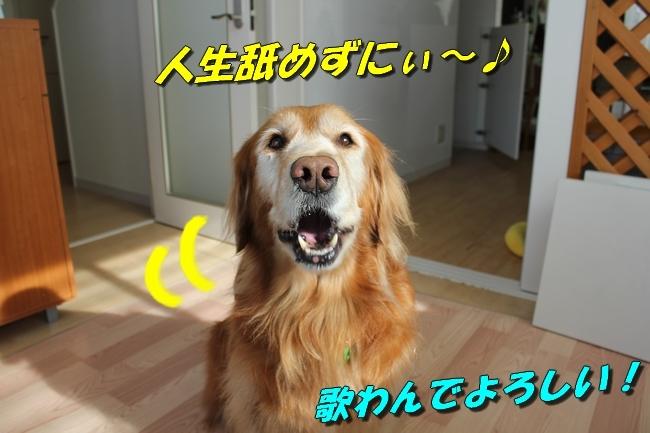 カトちゃんエアコン 029