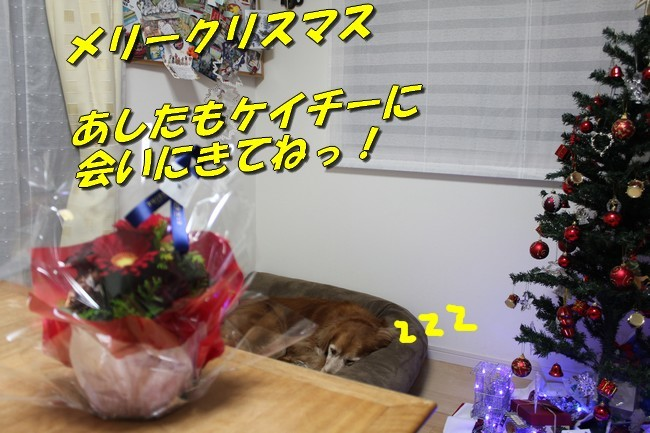 エルフ姉さんからのクリスマス 003