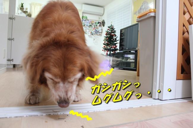 モモパパからのクリスマス 037