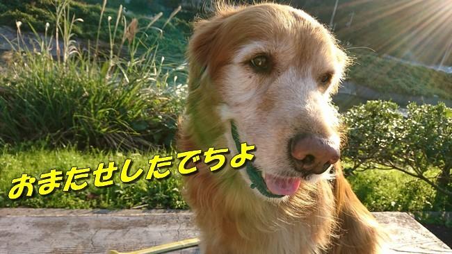 DSC_2543.jpg