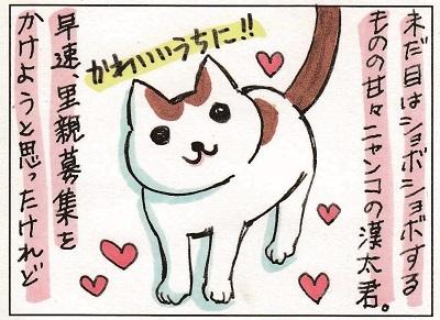子猫を撮るということ① 1-2