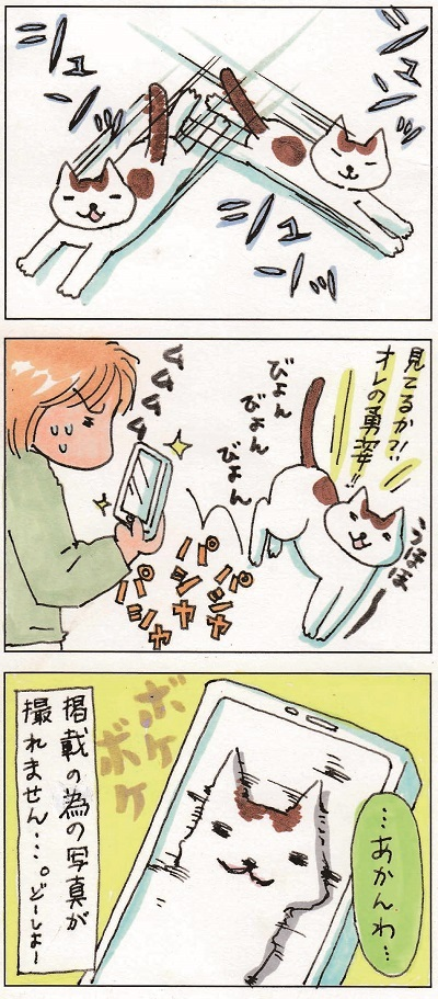 子猫を撮るということ① 2-2