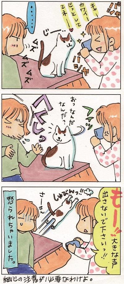 子猫を撮るということ② 2-2