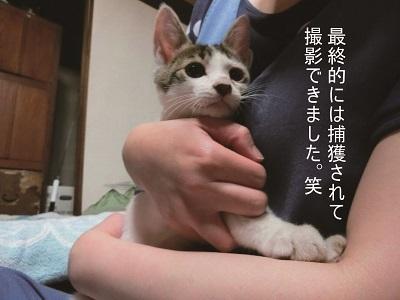 子猫を撮るということ②