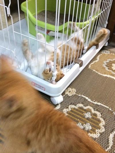 子猫まつりは続く