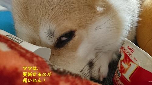 いぃギロリ