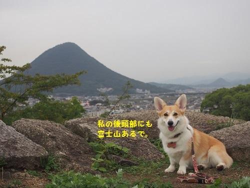 讃岐富士と芹