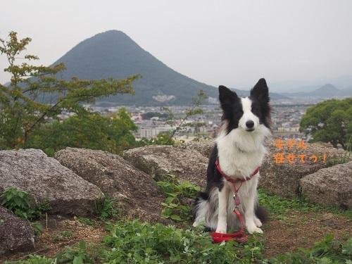 讃岐富士と沙羅