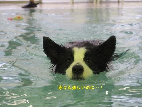 沙羅ちゃん泳ぐ