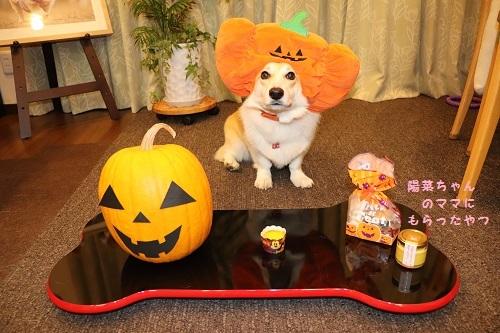 芹かぼちゃ