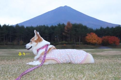 横姿と富士山