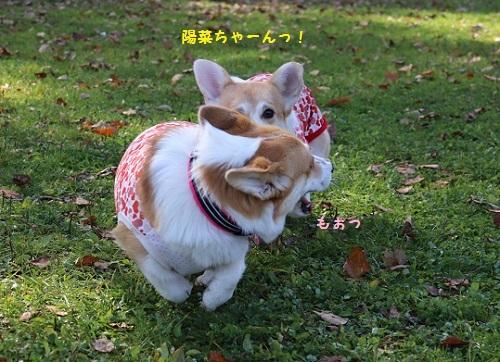 陽菜ちゃんを追っかける