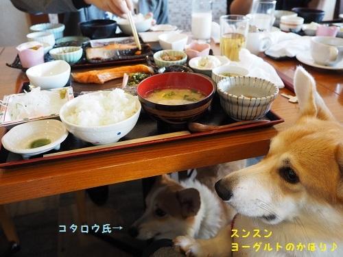 朝ご飯ちょうだい