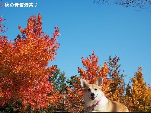 秋の青空や