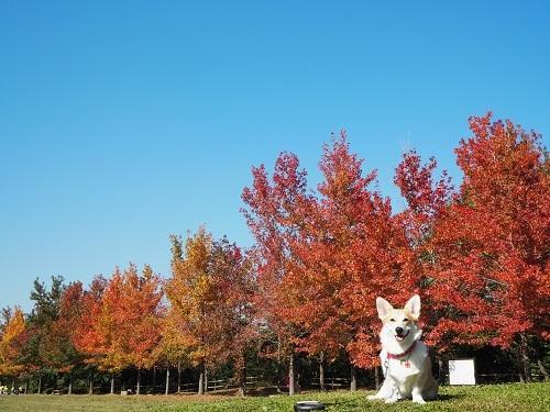 秋晴れ最高や