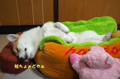 枕ちょぉど