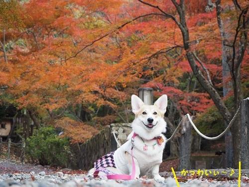 かわいぃ紅葉モデル