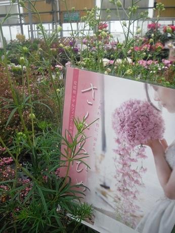 20171201 2 桜姫