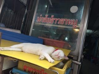 バンコク猫