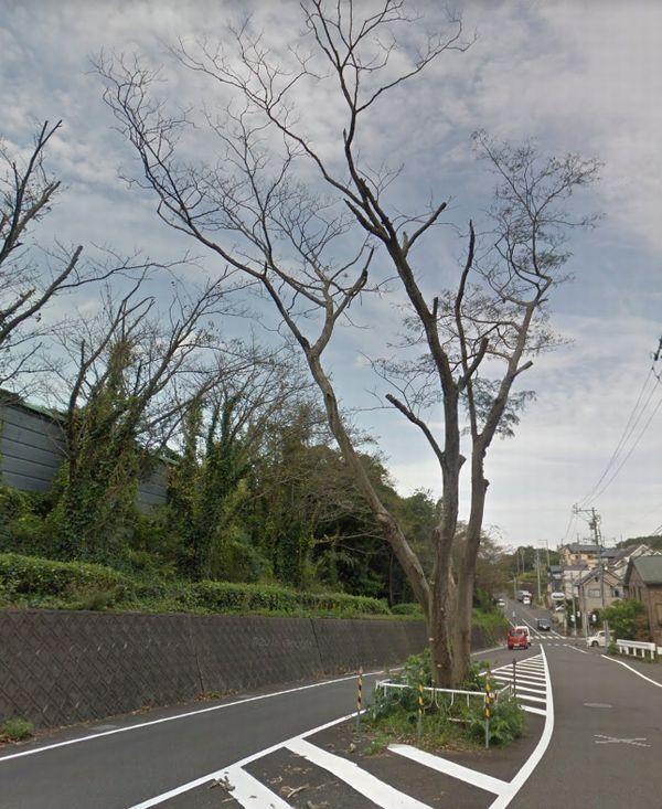 mishinoki.jpg