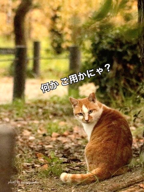 IMG_6440_1.jpg