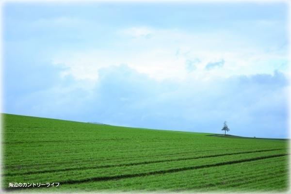カメラと巡る北海道~輝きの丘へ