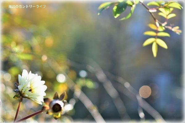20171129213012b4d.jpg