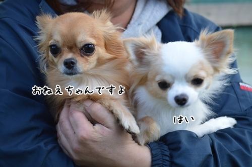 DSC_0100_20171026001057f1c.jpg