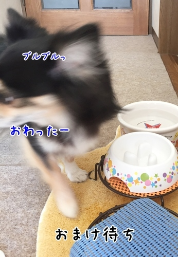 IMG_4885_2017101609521487a.jpg