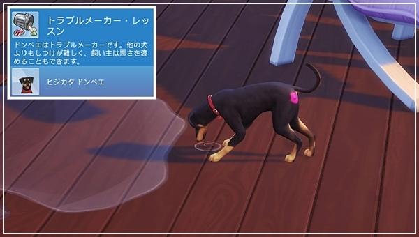 CandD-Hjikata1-20.jpg