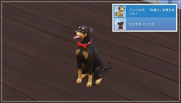 CandD-Hjikata1-33.jpg