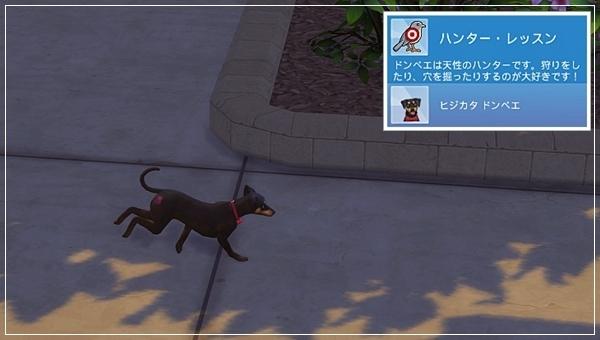CandD-Hjikata1-40-1.jpg