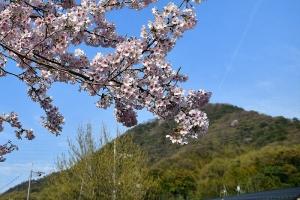 近所の公園と日浦山