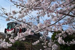桜の木と山陽本線