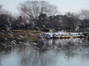 r水上公園の鳥