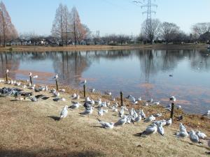 水上公園の鳥2
