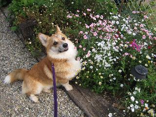 お花とSHUNシュン