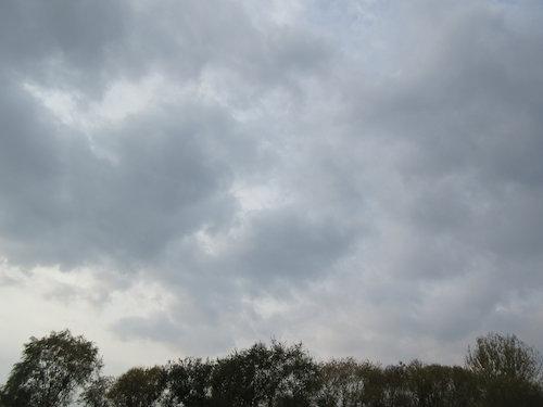 17.11.08.つれづれ