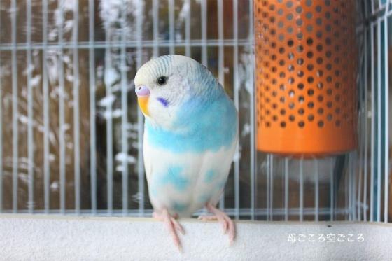 sIMG_1377-hahagokoro.jpg