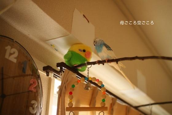 sIMG_2147p-suke.jpg