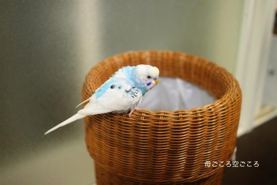 sIMG_2207-p-suke.jpg