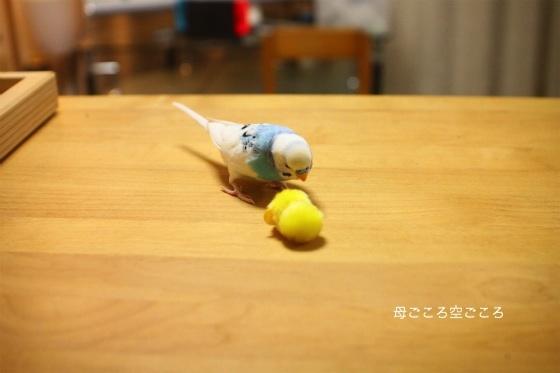 sIMG_2729.jpg