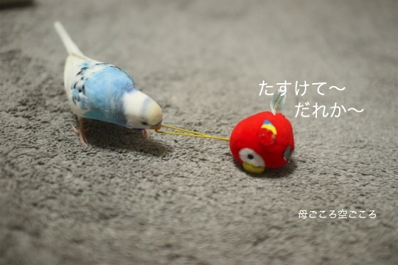 sIMG_2821.jpg