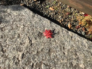 紅葉と御影石