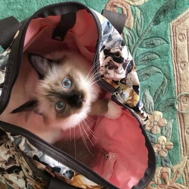 CAT CAFE – レスポートサック ー & オズくん